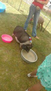 Barnyard Buddies Petting Zoo At Tractor Supply!