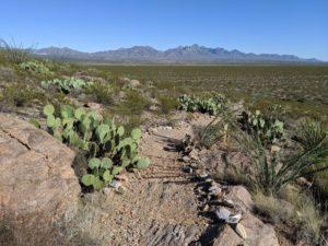 chihuahuan desert nature park d00b27a 1 300x225