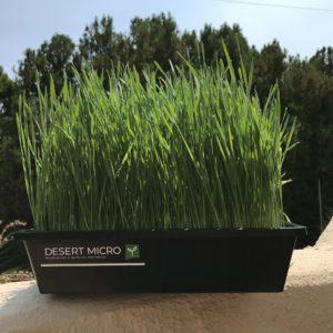 Desert Micro locally grown microgreens Las Cruces